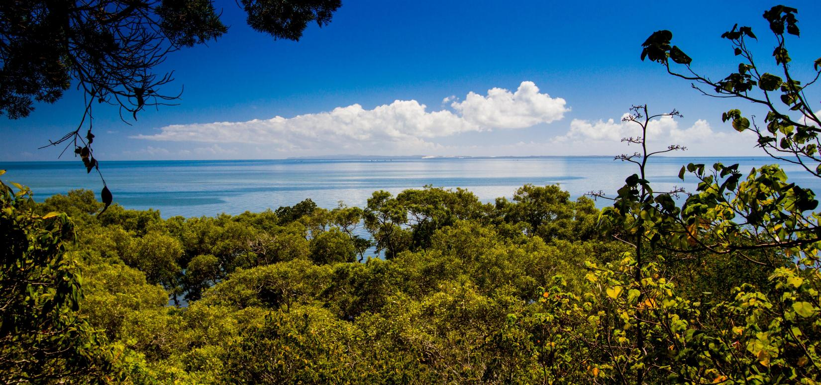 The view north across Moreton Bay to the sand hills of Moreton Island, from Peel Island (Teerk Roo Ra National Park).