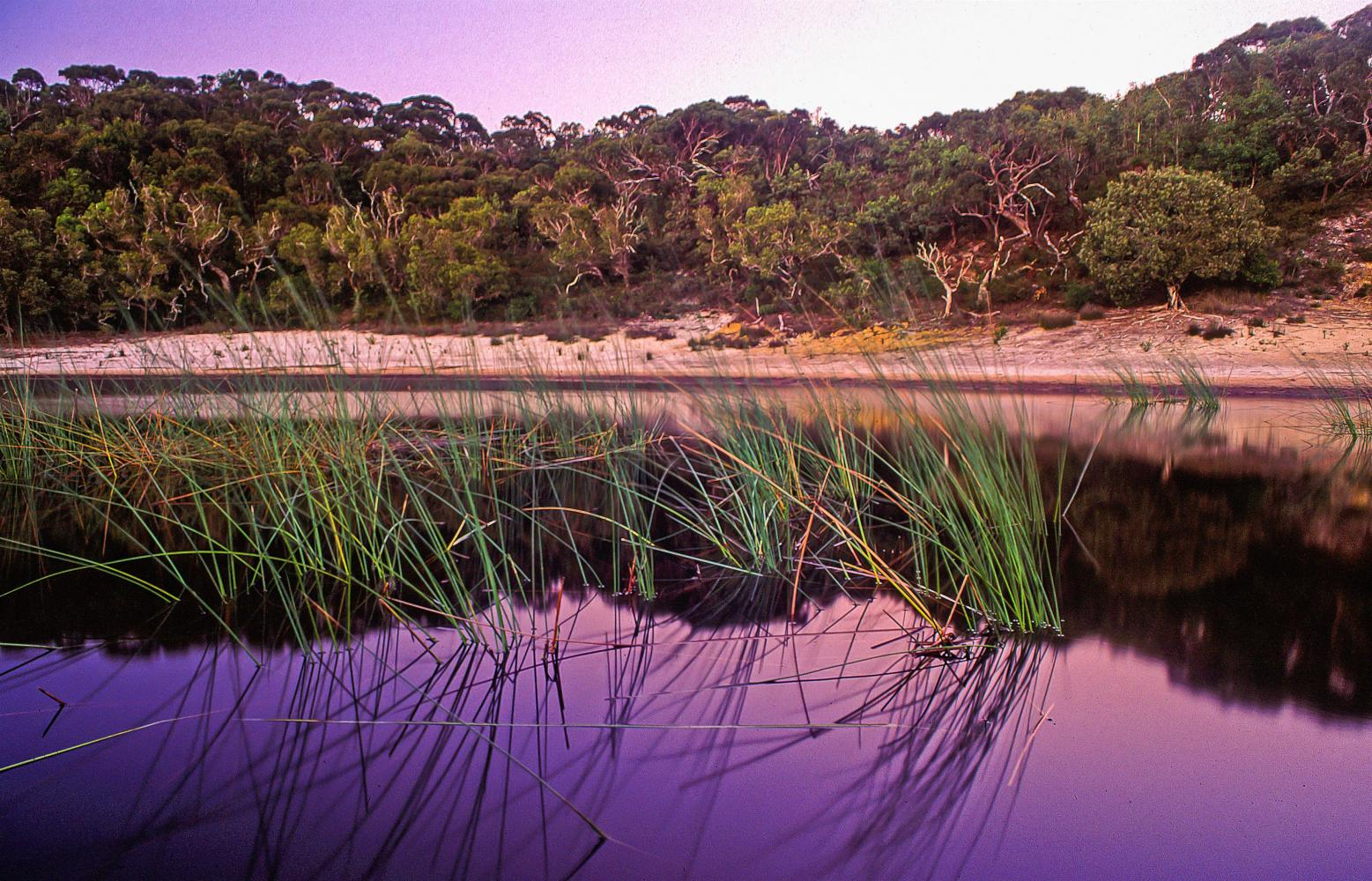 Fringed by heath scrub - a lake lost in the middle of Moreton Island.